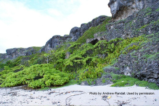 how to get to henderson island
